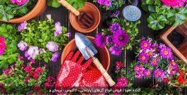 10 ماده طبیعی برای تقویت خاک گلدان