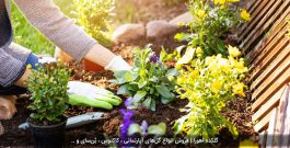 5 فایده مهم باغبانی برای سلامتی