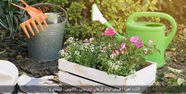 گل مناسب برای باغچه خانه