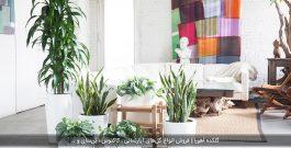 ترفندهایی برای رشد سریع گیاهان آپارتمانی
