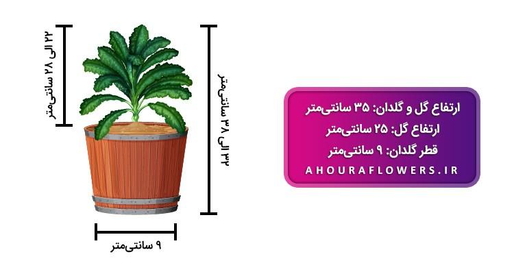 گلکده اَهورا | فروش انواع گلهای آپارتمانی ، کاکتوس ، بنسای