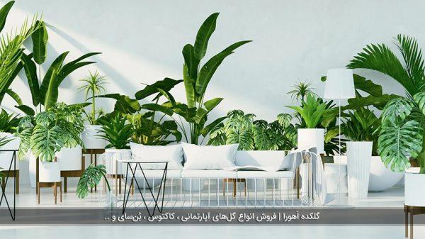 معرفی گیاهان آپارتمانی با رشد سریع