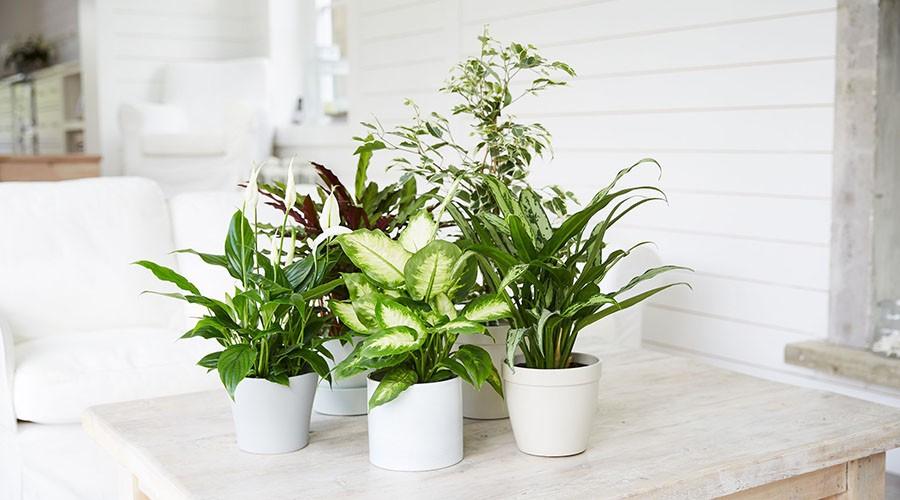نحوه مراقبت از گیاهان هنگام سفر