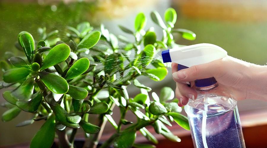روش آبیاری و نور مناسب گیاهان آپارتمانی